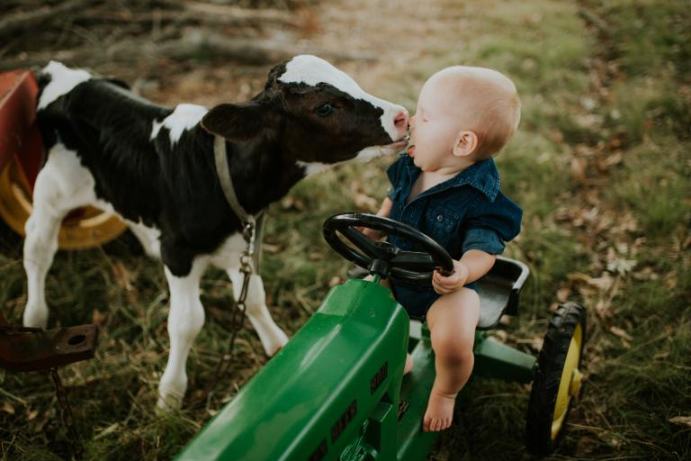 Baby cow nuzzling human baby