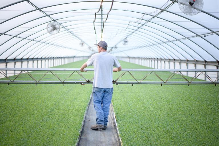 Farmer walking through a hoophouse