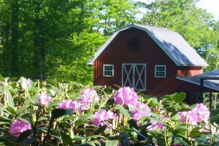 Barn behind flowers