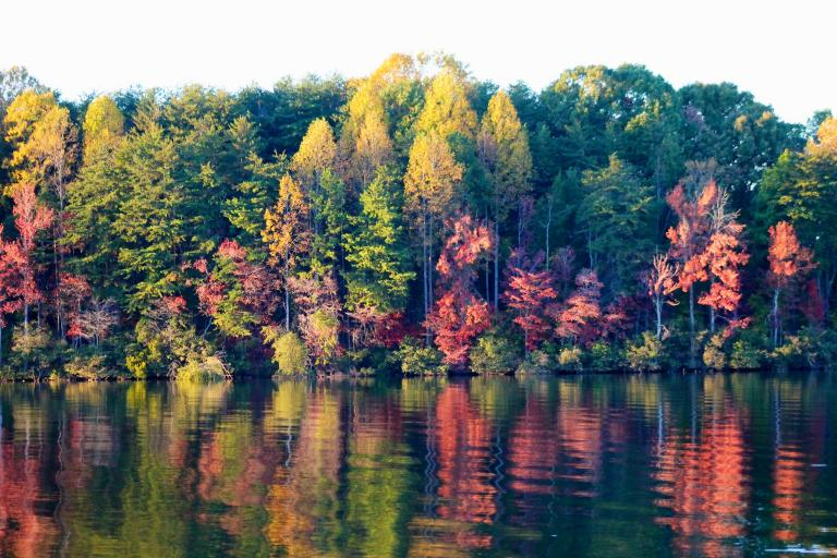 Fall foliage from across the lake